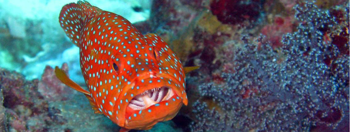 """March 27th - Presentation """"Diving in New Caledonia"""" by Jerome Castex"""